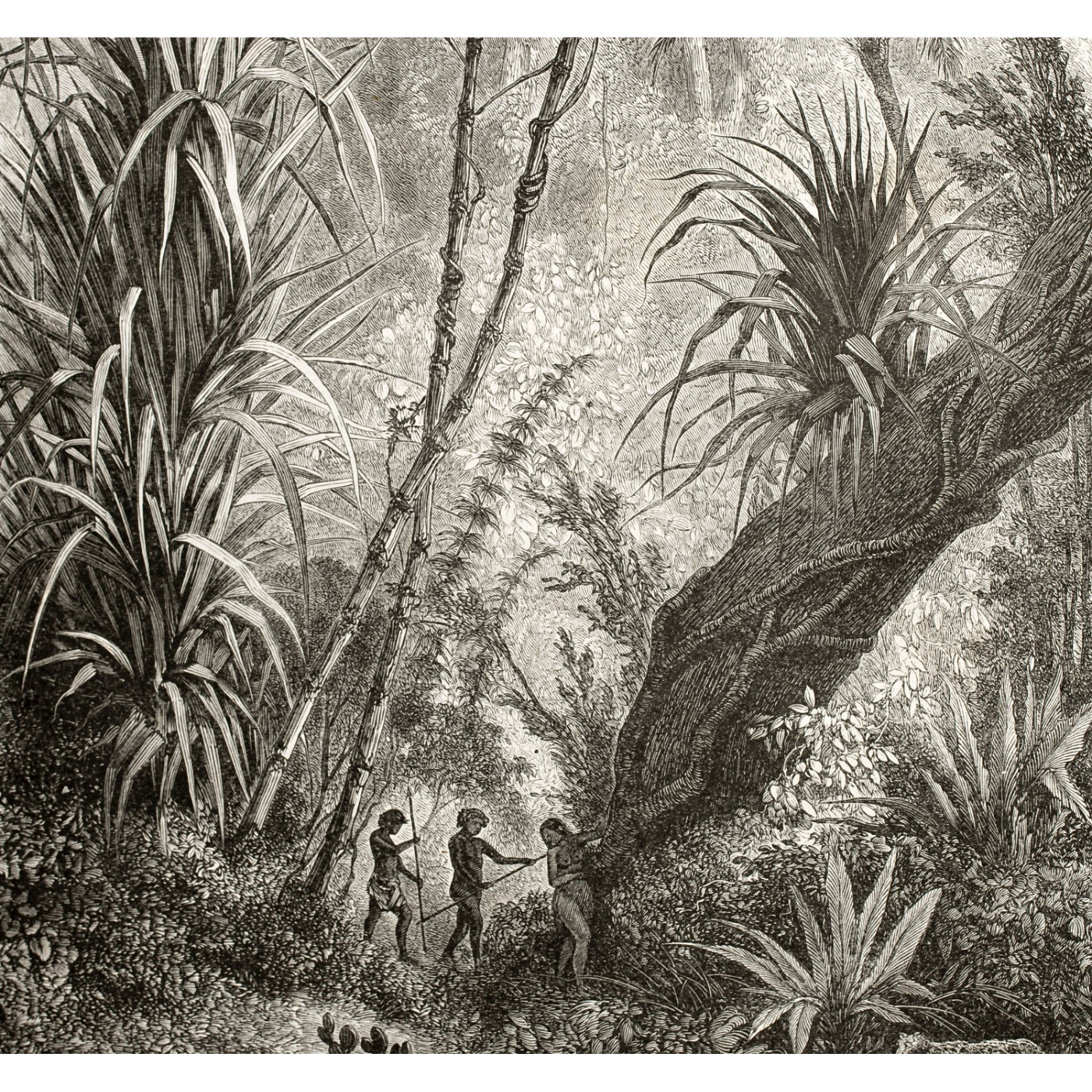 Lé Papiers De Ninon Panoramique Jungle Noir Et Blanc Amazonia