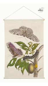 Botanic Butterfly